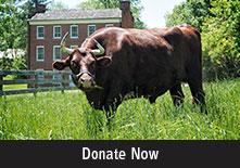 Donate to Hale Farm & Village