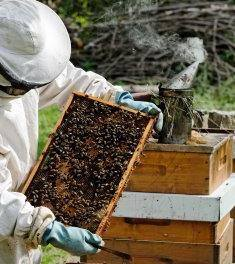Beekeeping at Hale Farm & Village