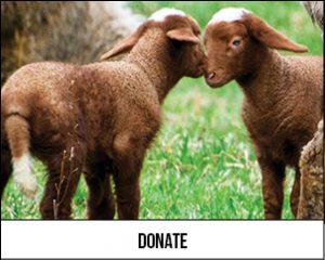 HFV Donate